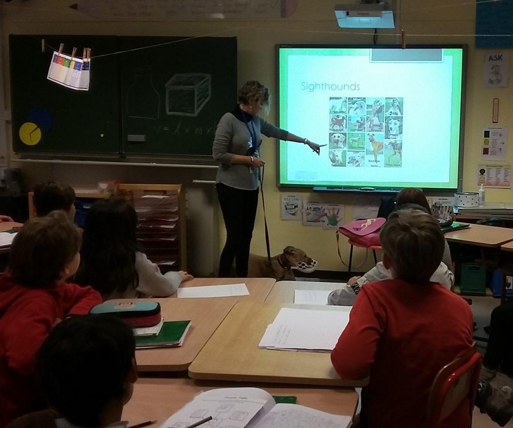 Scuola Europea di Varese - Adozione Levrieri - GACI